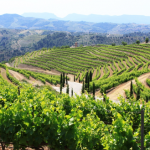 Priorat_wine_Region