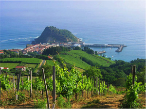 vineyards_txacoli