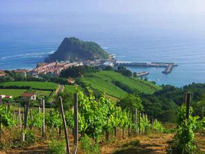vineyards_txacoli