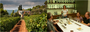 visit to vineyards and wine tasting at Girona